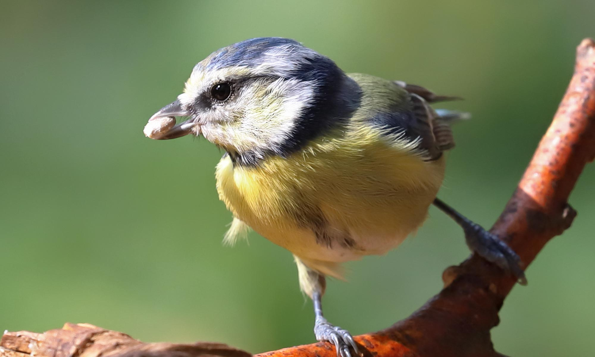 Vogelcafe